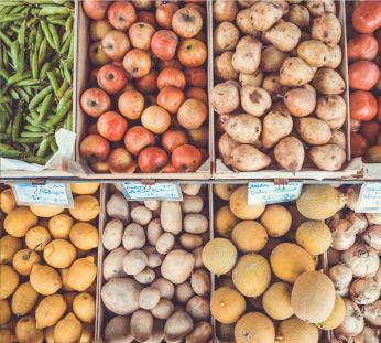 the-vegan-organic-solution