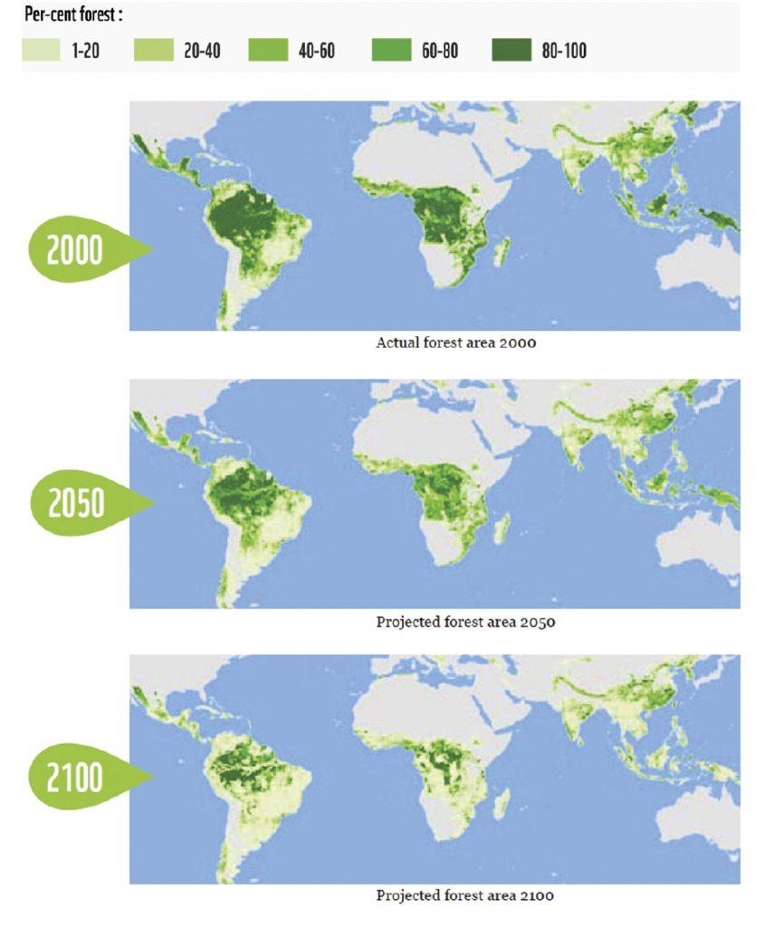 deforestation-t4